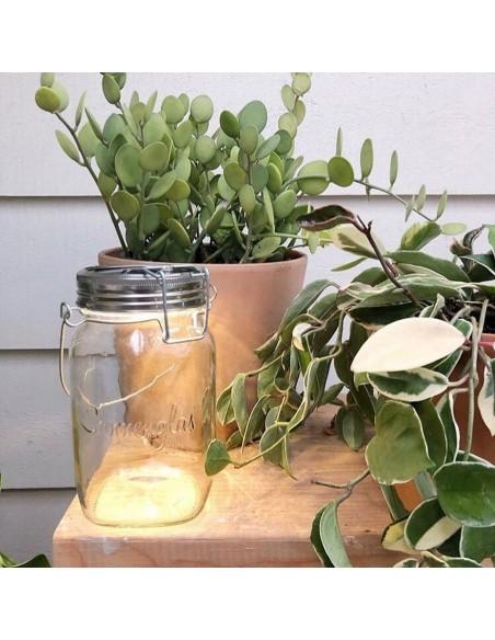 Lampe solaire sans fil SONNENGLAS® Valente Design avec pots de plantes